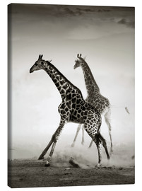 Canvas print  Giraffes running in the dust - Johan Swanepoel