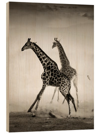 Hout print  Giraffes running in the dust - Johan Swanepoel
