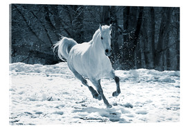 Acrylglas print  Gray mare in snow
