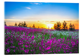 Acrylglas print  Sunrise over a blossoming meadow