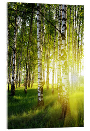 Acrylglas print  Birches flooded with light