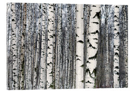 Acrylglas print  Birch forest in winter