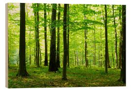 Hout print  Sunlight in the green forest
