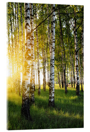 Acrylglas print  Birches in summer evening
