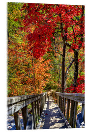 Acrylglas print  Wooden stairs in Autumn forest