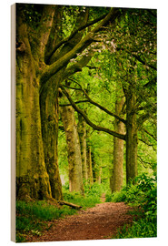 Hout print  Beautiful spring colors in a forest