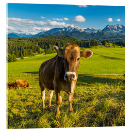 Acrylglas print  Funny Cow in the Alps - Michael Helmer