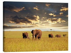 Canvas print  Elephants in Africa