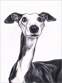 Acrylglas print  Whippet, blue and white - Jim Griffiths