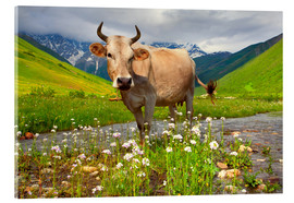 Acrylglas print  Cattle on a mountain pasture