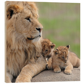 Hout print  Young lions