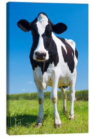 Canvas print  Cow - Black and White