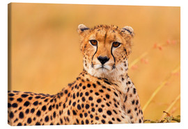 Canvas print  Eavesdropping cheetah