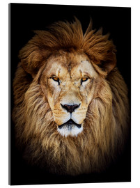 Acrylglas print  King of the Jungle Portrait