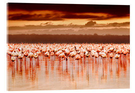Acrylglas print  Flamingos at sunset