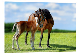 Acrylglas print  Mother Love - mare with foal