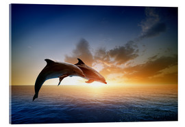 Acrylglas print  Dolphins in the sunset