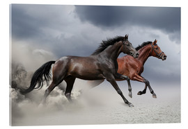 Acrylglas print  Horses in the storm