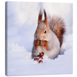 Canvas print  Squirrel in the snow