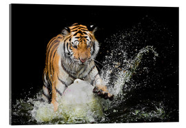Acrylglas print  Tiger Makes the water