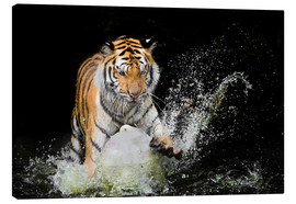 Canvas print  Tiger Makes the water