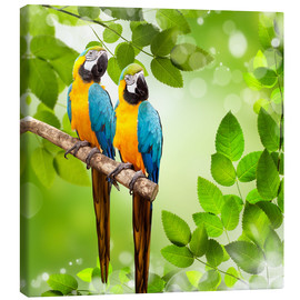 Canvas print  2 blue and yellow parrot