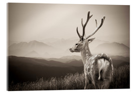Acrylglas print  Stag in the mountains
