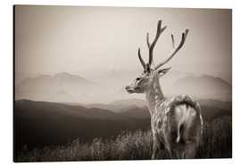 Aluminium print  Stag in the mountains