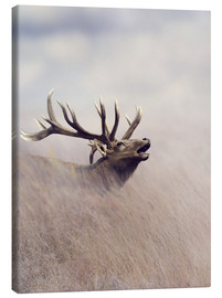 Canvas print  The call of the stag
