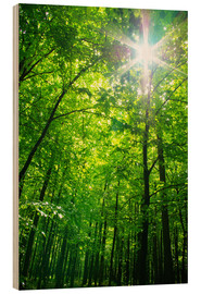 Hout print  Through the canopy