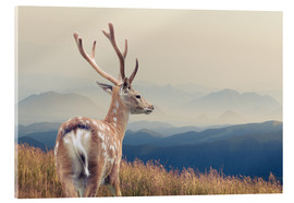 Acrylglas print  Deer standing on the mountain