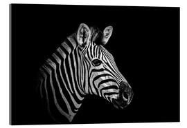 Acrylglas print  Zebra - close up