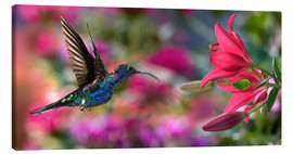 Canvas print  Hummingbird (Archilochus Colubris) with lilies