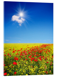 Acrylglas print  Sunny landscape with flowers in a field