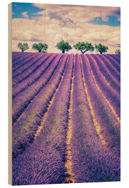 Hout print  Lavender field with trees in Provence, France