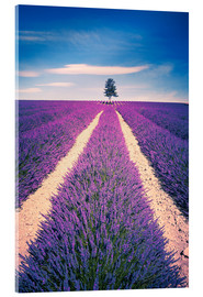 Acrylglas print  Lavender field with tree in Provence, France