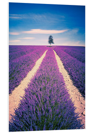 PVC print  Lavender field with tree in Provence, France
