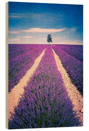 Hout print  Lavender field with tree in Provence, France