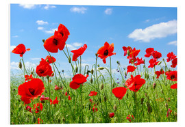PVC print  Red poppies in green field
