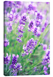Canvas print  Lavender flowers