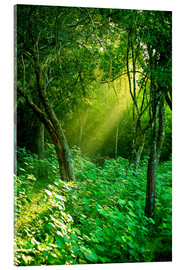 Acrylglas print  Sunlight rays in the rain forest in Sri Lanka