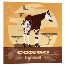Acrylglas print  Congo - Okapi - Kidz Collection