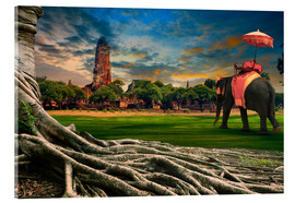 Acrylglas print  big root of banyan tree and elephant