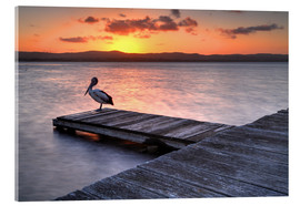 Acrylglas print  A pelican resting on the lake Tuggerah