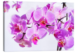 Canvas print  Beautiful pink-magenta orchid