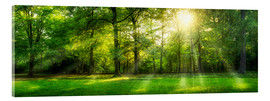 Acrylglas print  Forest panorama in summer - Jan Christopher Becke