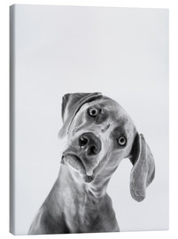 Canvas print  Questioning look - Finlay and Noa