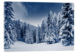 Acrylglas print  Winter landscape with snow covered trees