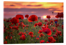 Acrylglas print  Poppies in sunset - Steffen Gierok