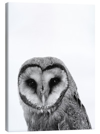Canvas print  The owls are not what they seem - Finlay and Noa